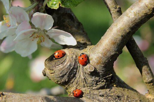 Insektensommer 2021: Sechsbeiner beobachten und kennenlernen